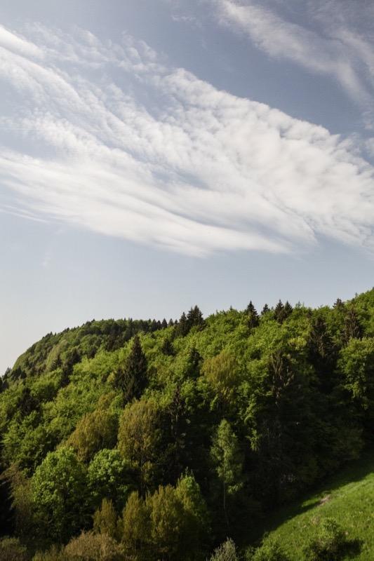 Foresta dei Folignani, Lessina